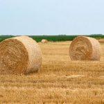 Trgovanje biomasom moguće uz onlajn platformu