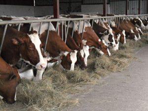 krave jedu seno