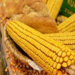 Tražnja za kukuruzom ukazuje na rast cene te žitarice