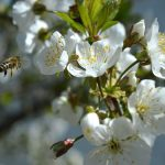 Poziv pčelarima da učestvuju u anketi: COLOSS monitoring gubitaka pčela i u Srbiji