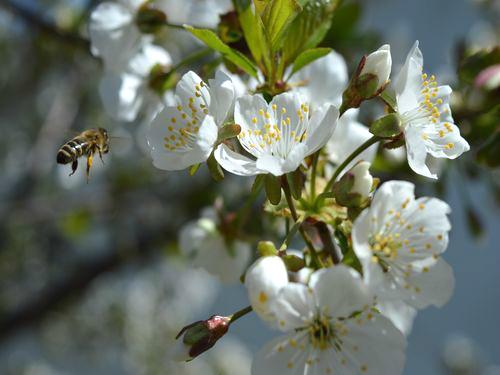 Sačuvajmo pčele, budimo odgovorni