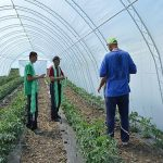 Za nabavku plastenika i opreme u njima sredstva za 80 poljoprivrednika