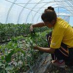 Šansa za mlade u Novom Bečeju – Obuka, biznis plan i plastenik
