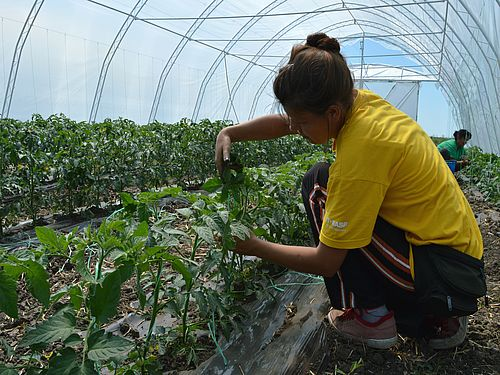 Objavljen Javni poziv za istraživače u oblasti organske proizvodnje
