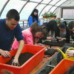 Đaci poljoprivredne škole u Zrenjaninu oplemenili dvorišta škola, vrtića i mesnih zajednica