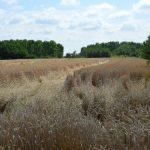 EK donela smernice za prodaju poljoprivrednog zemljišta