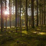 Lokalne samouprave da odrede parcele za pošumljavanje