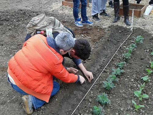 Želite da obavljate stručnu praksu iz oblasti organske poljoprivrede?