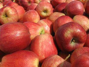 jabuke krupno crvene