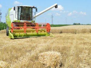 kombajn žetva pšenice