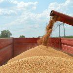 Direkcija otkupljuje pšenicu po ceni od 18 din/kg sa PDV-om