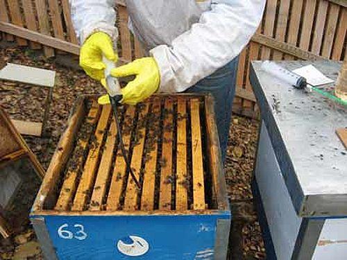 Kako suzbiti varou u organskom pčelarenju