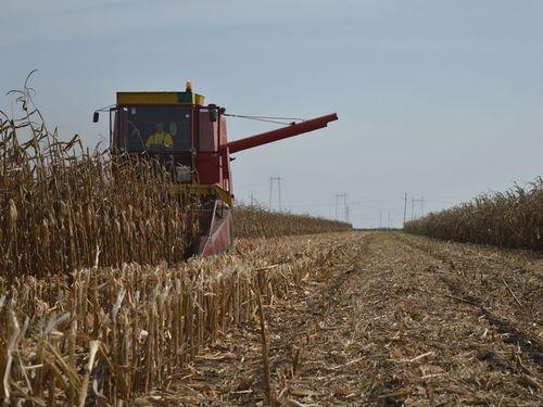 Read more about the article Skladištenje kukuruza u cilju sprečavanja pojave mikotoksina