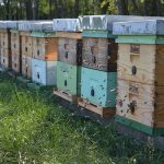 Najmoderniji katastar pčelinjih paša u Srbiji – sistem bez granica