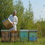 Uzimljavanje pčelinjih zajednica – iskustvo pčelara
