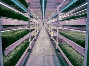 proizvodnja hrane u podrumu