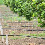 Ulaganje u sisteme za navodnjavanje u voćnjaku je neophodno