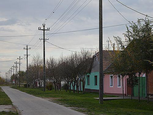 kuce na selu 22