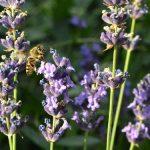 """Međunarodna konferencija """"Pomerajmo granice"""" i izložba pčelarske opreme"""