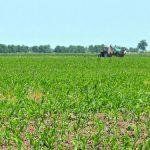Uloga fosfora i fosfornih đubriva u postizanju visokih i stabilnih prinosa