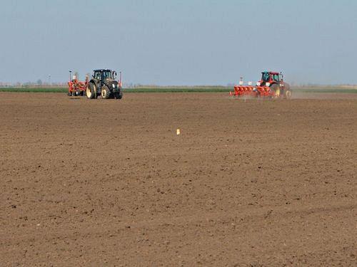 Setva kukuruza – Da li se opredeliti za ranu setvu?