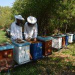 O prvom prolećnom pregledu i prolećnom razvoju pčelinjih društava