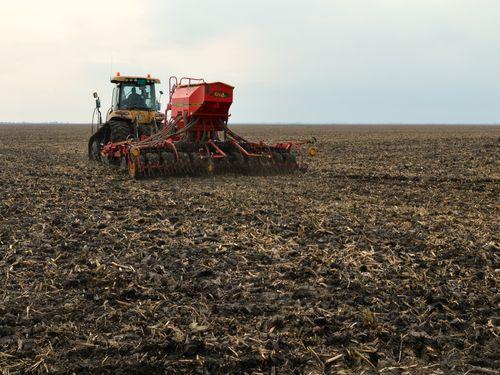 Setva pšenice: rokovi, predusev, količina semena