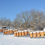 Pčelinje zajednice u januaru