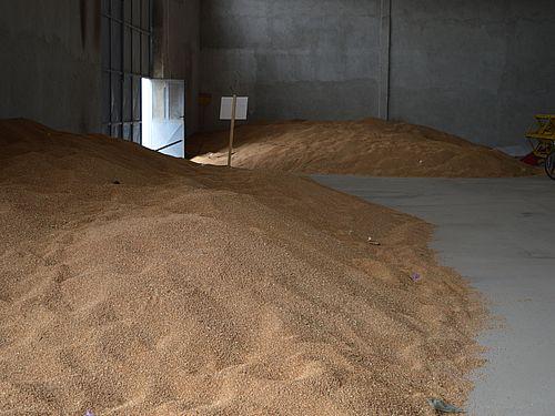 Ne dozvolimo štetočinama da unište uskladišteno žito