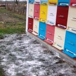 Izimljavanje pčelinjih zajednica