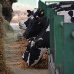 Bespovratna sredstva za sufinansiranje opremanja stočarskih farmi