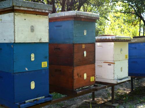 Stare ili nove košnice? Saveti mladim pčelarima