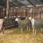 Ovčarstvo: O ishrani šilježadi i dvizadi