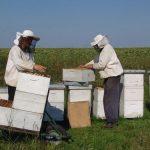 Izmene Pravilnika za podsticaj po košnici pčela