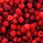 malina plodovi
