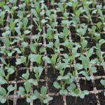 Kvalitet semena za setvu