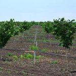 Podsticaji za podizanje višegodišnjih zasada voćaka, vinove loze i hmelja