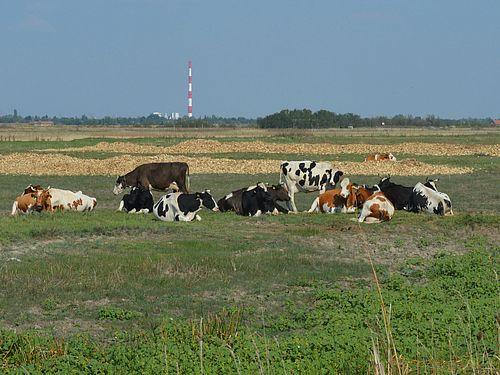 krave na pasnjaku leze