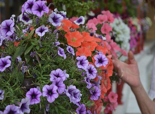 Međunarodni sajam hortikulture u Beogradu od 17. do 20. juna