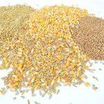 Kukuruz na berzi oko 17 din/kg uz klauzulu gratis lager