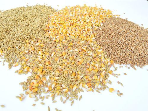 psenica kukuruz zrno