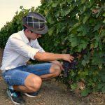 Gajite manje poznate sorte vinove loze? Upišite se u evropsku Vitis bazu podataka