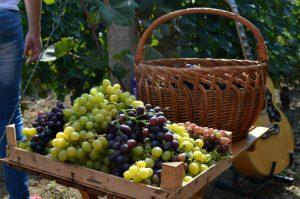 grožđe u gajbici