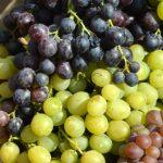 Uslovi za čuvanje stonog grožđa u hlađenim skladištima