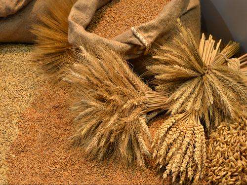 Ministarstvo saglasno sa predlogom za naturalnu razmenu pšenice