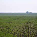 Savet pred setvu pšenice: Izbegavati plodored kukuruz-pšenica