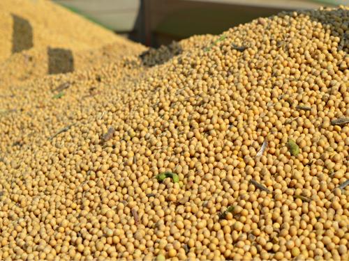 Rast cene soje, dok je za pšenicom i kukuruzom manja tražnja