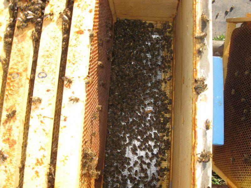 Uginuća pčela tokom jeseni, zime i proleća – veliki problem za pčelare