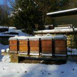 Vlaga u košnici štetnija je po pčelinju zajednicu i od najhladnije zime