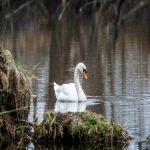 Virus ptičjeg gripa H5N8: biosigurnosne mere, klinički znaci, prenošenje, zaštita